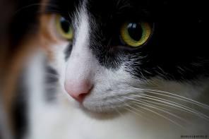 Je ne peux pas cacher que je suis gaga de mes chats... Ce sont mes premiers modèles. Et puis de toute façon ils n'ont pas le choix, s'ils veulent leurs croquettes ! Haha.